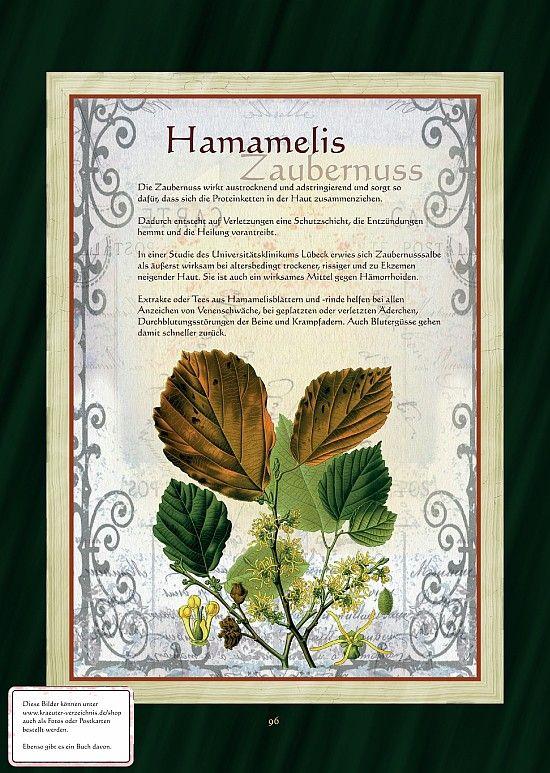 Zaubernuss - Hamamelis
