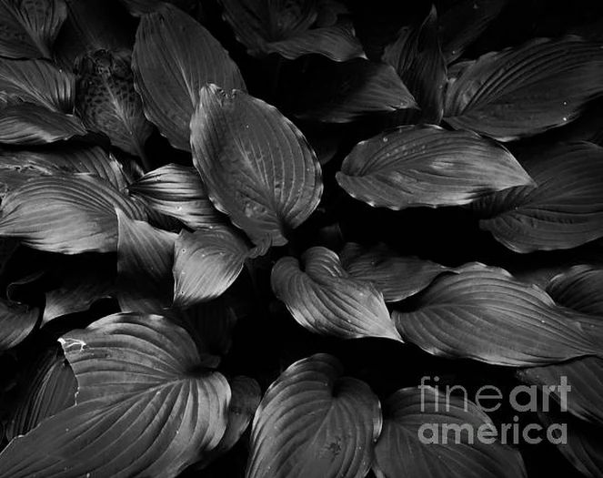 Foliage Black and White Photograph by Andrea Anderegg  - Foliage Black and White Fine Art Prints and Posters for Sale