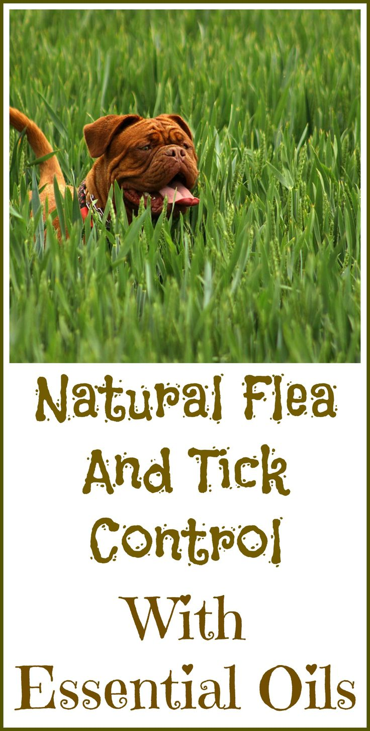 Best 25 flea repellant ideas on pinterest natural flea remedies dog flea remedies and - Home remedies to keep fleas away ...