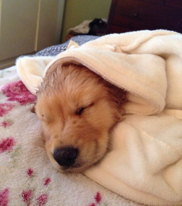 """""""Ahh, I've never been cozier in my life. Maybe bath time isn't that bad.""""   24 Adorable Puppies Getting Their First Bath"""