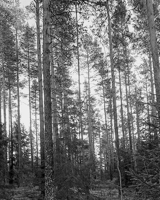 #Norway #Norge #Degernes #compass_passport #visitnorway #getaway #travelgram #travelingram #voyager #traveller #traveling #travelphoto #travelbug #traveltheworld #traveladdict #welovetotravel #seetheworld #reisefoto #reise #wanderlust #nofilter #blackamdwhite #forest #norwegianwood #trees #østfold @trine14 by compass_passport. getaway #travelbug #blackamdwhite #degernes #reisefoto #seetheworld #traveltheworld #wanderlust #traveling #compass_passport #travelingram #østfold #traveller…