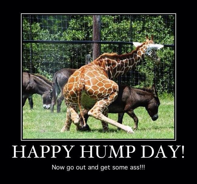 Happy Hump Day Meme Funny : Happy hump day wednesday funnies pinterest more