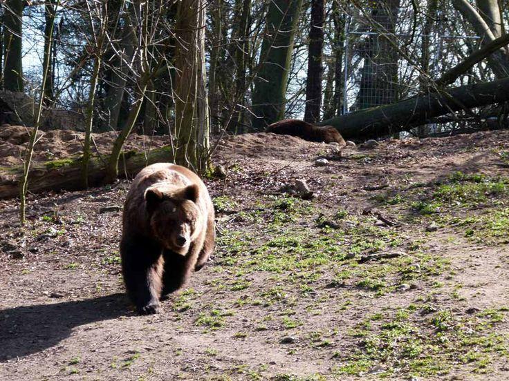 Vorbereitungen für einen Aquarellkurs im Schweriner Zoo | Bären im Schweriner Zoo (c) Frank Koebsch (1)
