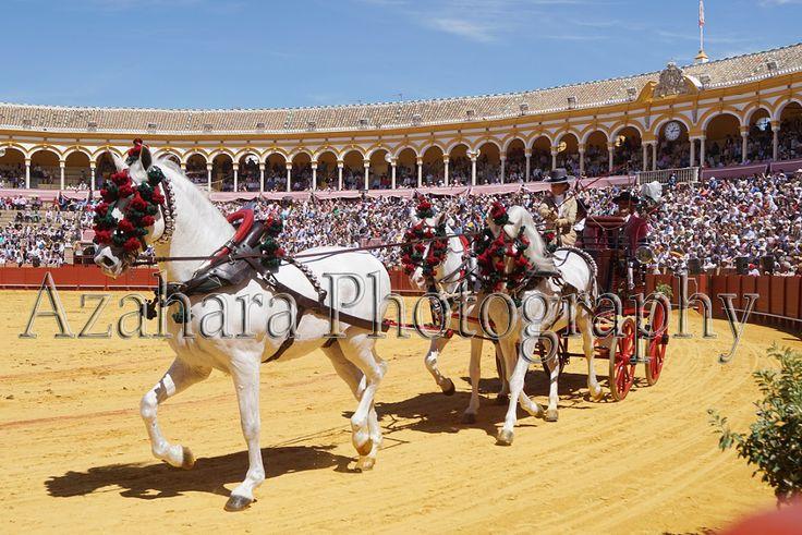 Real Maestranza de Sevilla - Unicorn of Spanish Horse