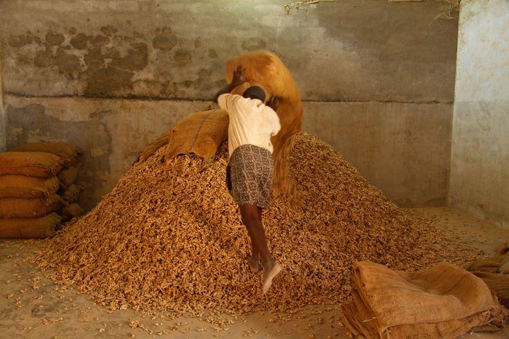 Ginger warehouse, Cochin
