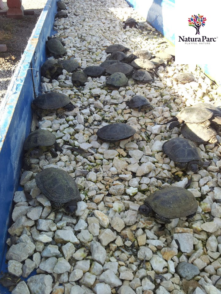 new guests at Natura Parc  www.naturaparc.ro