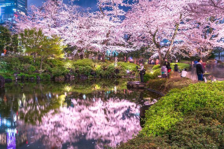 お花見も楽しめる!都内で桜が見える春の絶景カフェ&レストラン5選 2枚目の画像
