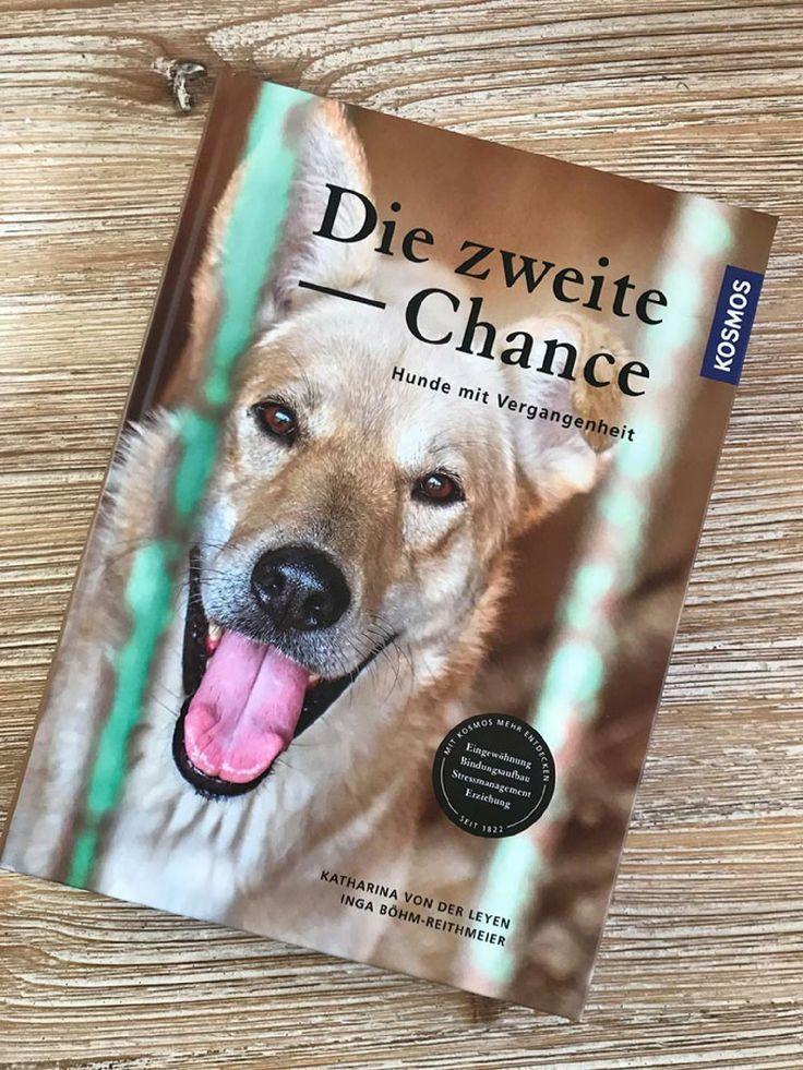 Die Zweite Chance Wie Man Hunden Mit Vergangenheit Das Neue