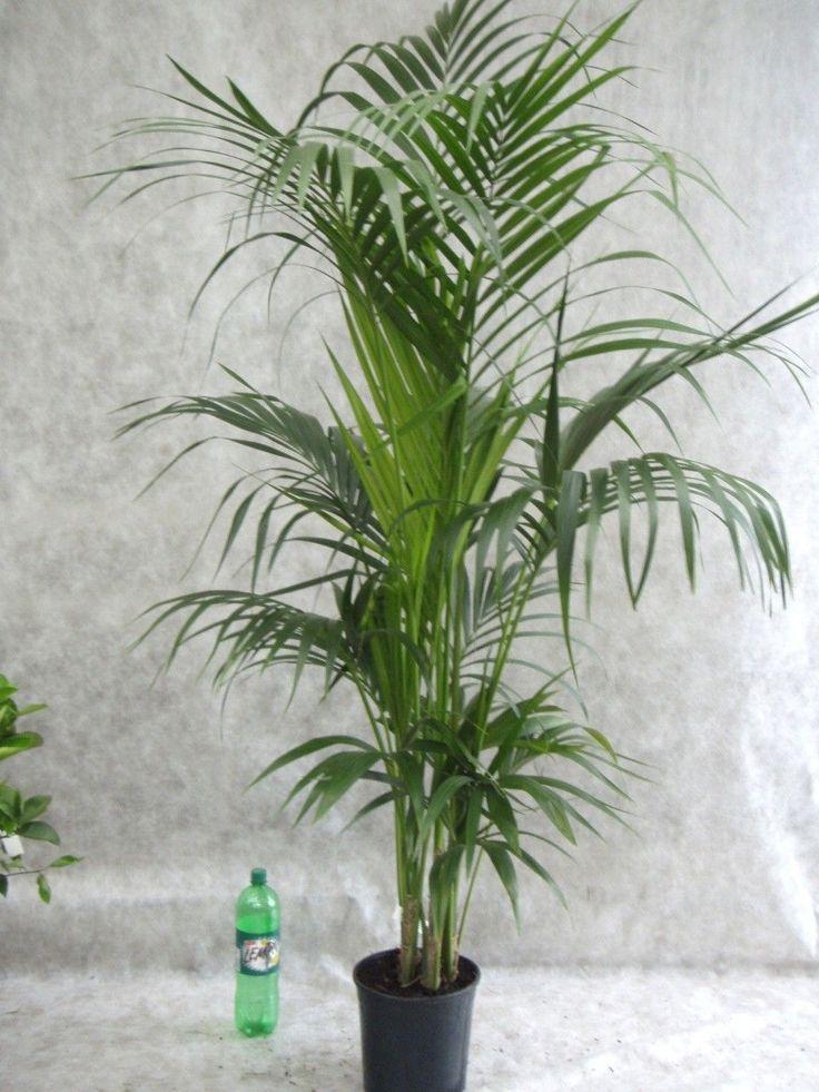 die besten 25 pflanzen f r pralle sonne ideen auf pinterest steingarten brunnenbohrungen und. Black Bedroom Furniture Sets. Home Design Ideas