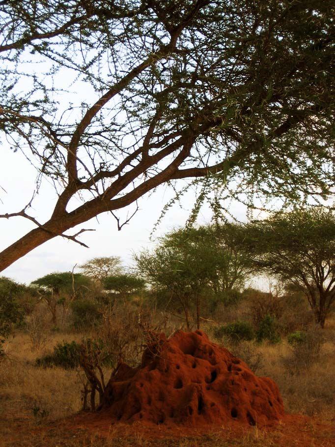 kenya - natura - safari