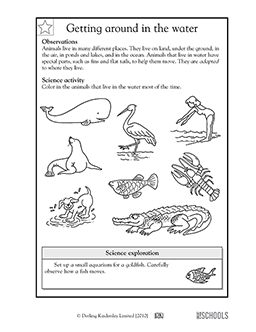 1st grade 2nd grade kindergarten science worksheets getting around in the water wetland. Black Bedroom Furniture Sets. Home Design Ideas