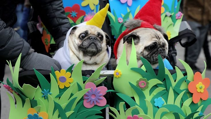 Photos: Chilly dogs strut in Soulard's Beggin' Pet Parade