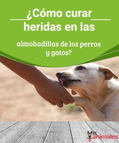 ¿Cómo curar heridas en las almohadillas de los perros y gatos? Las almohadillas de tu mascota son una zona proclive a sufrir heridas. Si las lesiones no son graves, puedes curarlas tu mismo. Te contamos cómo. #heridas #curar #salud #almohadillas