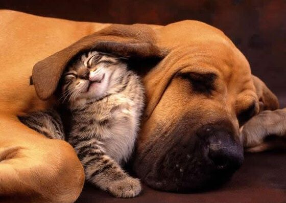 Well, that's just adorable.: Cats, Animals, Kitten, Friends, Dogs, Sweet, Pets, Adorable, Things