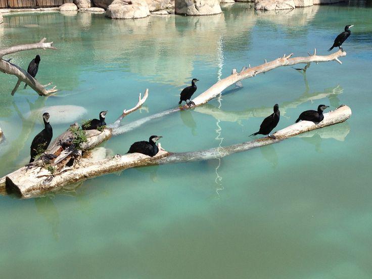 Tropical Birds Enjoying The Day
