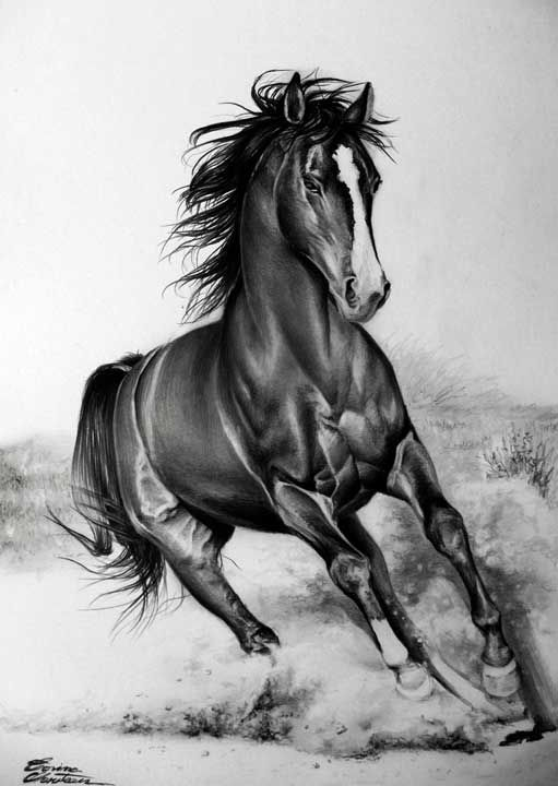 Horse - Desen în Creion de Corina Olosutean // Horse - Pencil Drawing by Corina Olosutean