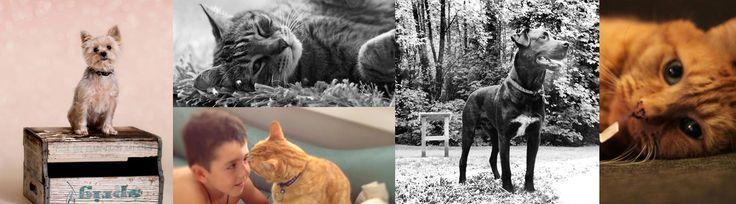 Hastings Vet - Veterinary Hospital & Animal Clinic   Burnaby & Vancouver, BC