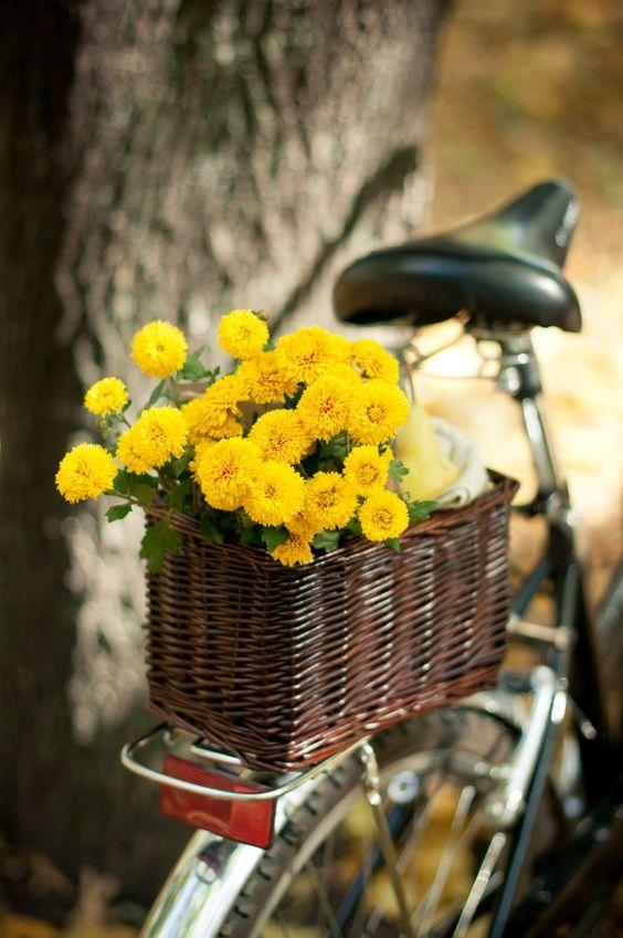 Flores amarillas en una bicicleta