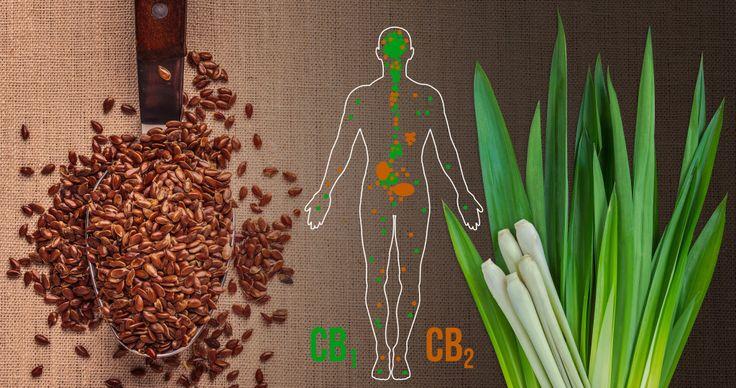 A kannabinoidok lipid (zsír) alapú molekulák, amik valamilyen mértékben a kannabinoid receptorokon fejtenek ki hatást, azok pedig az endokannabinoid