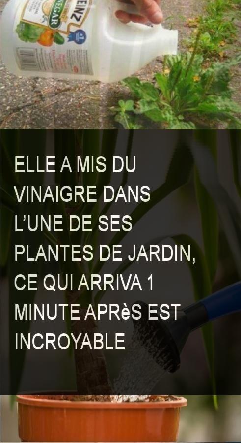 Elle a mis du vinaigre dans l'une de ses plantes de jardin, ce qui arriva 1 minute après est incroyable