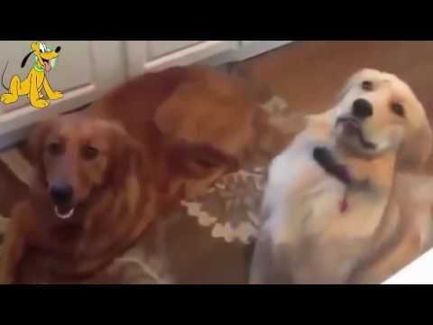 Funny Cat Videos 2016: Funny Cat Fails, Fuuny Cat And Dog Compilation 2016 #6 - http://positivelifemagazine.com/funny-cat-videos-2016-funny-cat-fails-fuuny-cat-and-dog-compilation-2016-6/ http://img.youtube.com/vi/PodcDbmUcGQ/0.jpg  Funny Cat Videos 2016: Funny Cat Fails, Fuuny Cat And Dog Compilation 2016 #6 Thank for watching my videos please subscribe for more funny cat videos, … ***Get your free domain and free site builder*** Click to Surprise me! Please follow a