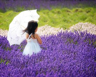 Lavender By the Bay | par Babylon and Beyond Photography