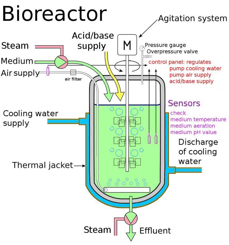 Best Tissue Bioreactor Design