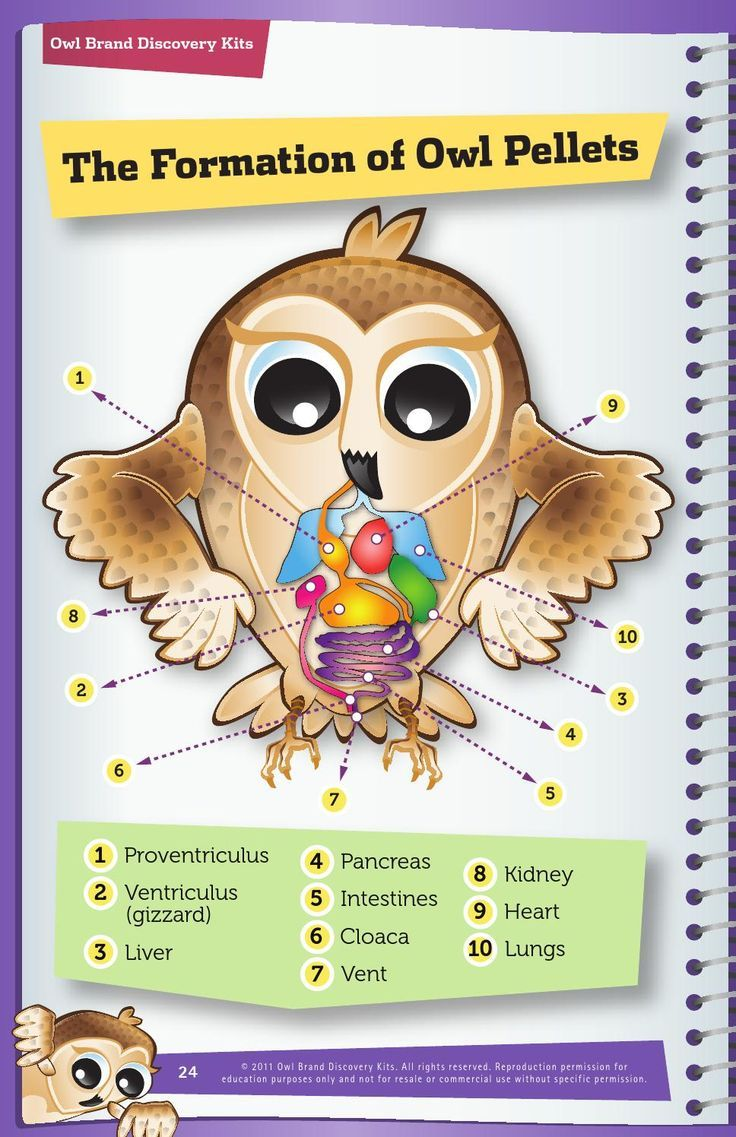 10 Best Owls Images On Pinterest High School Science