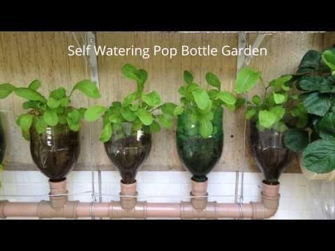 Bottle Garden The Incredible Self Watering Pop Grow System! - https://www.youtube.com/watch?v=_OFlkJ70TCc
