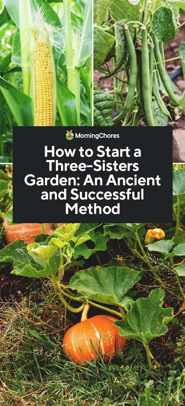 Pin Von Paola R Auf It S Time Let It Grow In 2020 Gemuse Anbauen Mischkultur Gartentipps