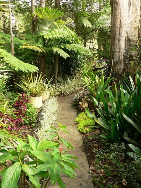 17 best images about cool climate tropical garden on for Tropical garden designs australia