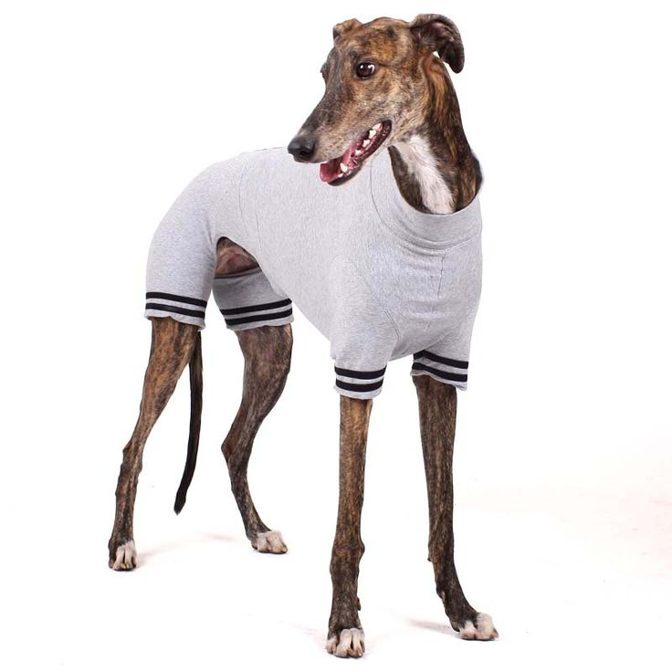 53 best whippetclothing images on pinterest greyhounds whippets and dog clothing. Black Bedroom Furniture Sets. Home Design Ideas