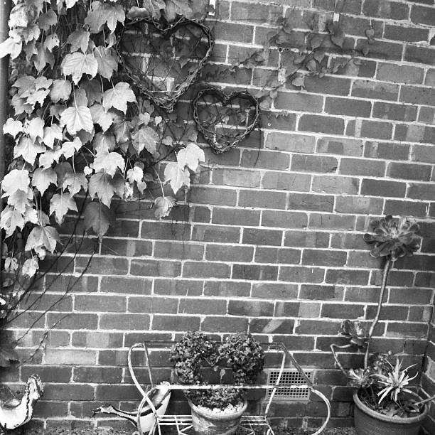 i heart my courtyard...