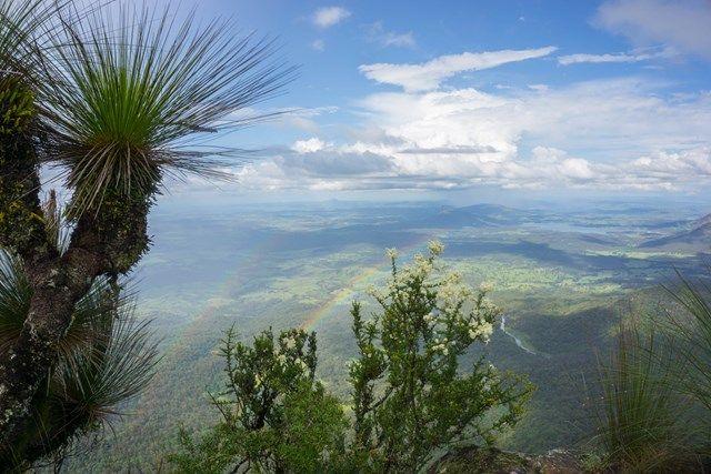 Mt Mitchell - Aussie Bushwalking