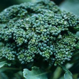 Broccoli si o no? Problemi di tiroide  Stai guardando: Soffri di ipotiroidismo? 8 consigli per migliorare la dieta