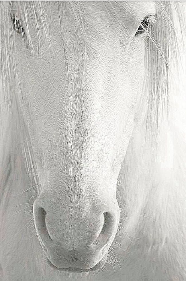 Pferdemagie Kunstdruck