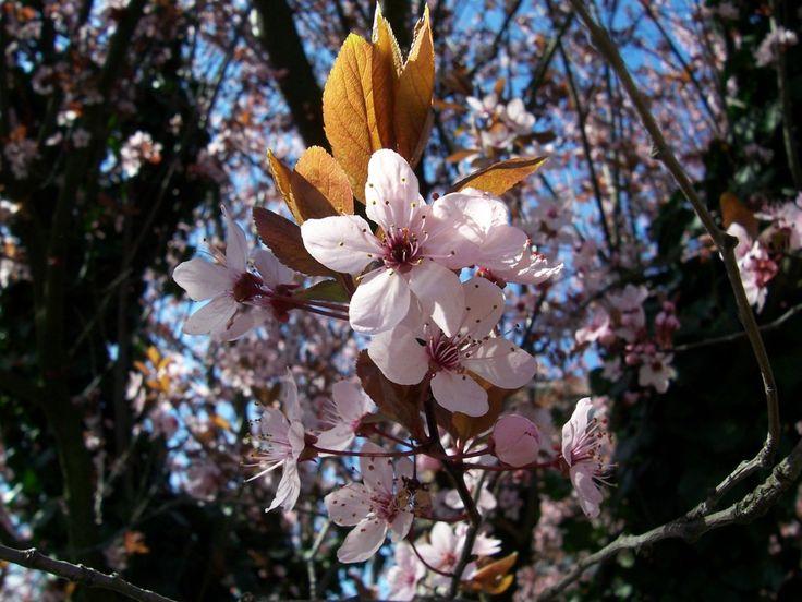 Makro kukkia - valokuvia ladata ilmaiseksi: http://wallpapic-fi.com/maisemia/makro-kukkia/wallpaper-41184