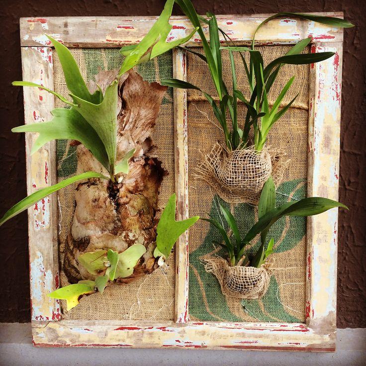 Orquídeas e Chifre-de-veado dão vida à velha janela, forrada com saca de café usada! Composição indicada para varandas, sacadas ou qualquer ambiente com iluminação indireta. Criação em parceria com a Oficina de Fine Arts, em Curitiba.