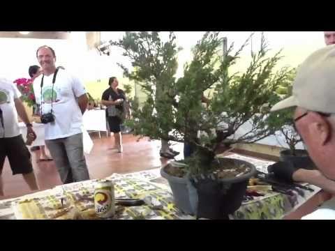 Hidaka estilizando bonsai de junipero Itoigawa - YouTube