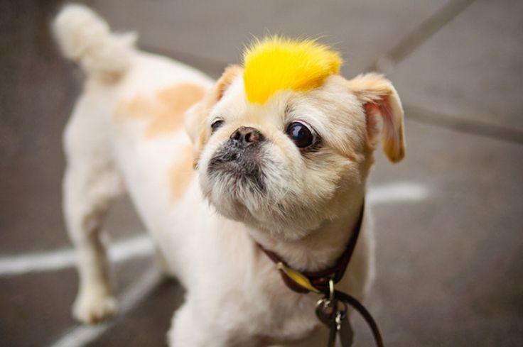 Top 10 Hilarious Dog With Wigs