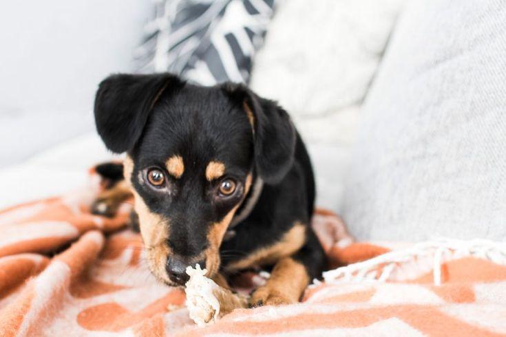 Gretel, Pflegehund, Tierschutz, SOS Dogs Romania, Foster, Tiere, Hunde, Kolumne, Text, Inspiration, Blog, stryleTZ