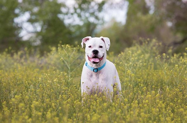 A puppy enjoying the wildflowers for his portraits!