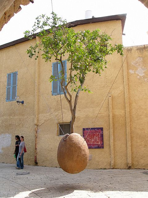 Citrus tree in a hanging planter in Old Jaffa (I want to make one of these so bad.)