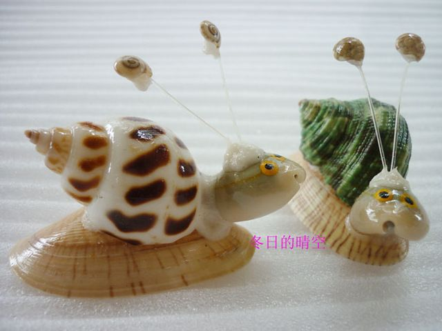 Decoración del hogar concha natural artesanías de regalo pequeño regalo caracol                                                                                                                                                                                 Más