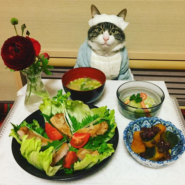 Teriyaki pork,Salad,Miso soup,Simmered Pumpkin #cat#cats#catstagram#catsofinstagram #instacat_meows#instacat_models#ねこ #ニャンスタグラム#ネコ#にゃんこ#みんねこ #猫#food#japanesefood#豚の照り焼き #りんごとセロリのサラダ#かぼちゃと小豆のいとこ煮#みそ汁#ラナンキュラス#zip写真部 #mannishboys#斉藤和義
