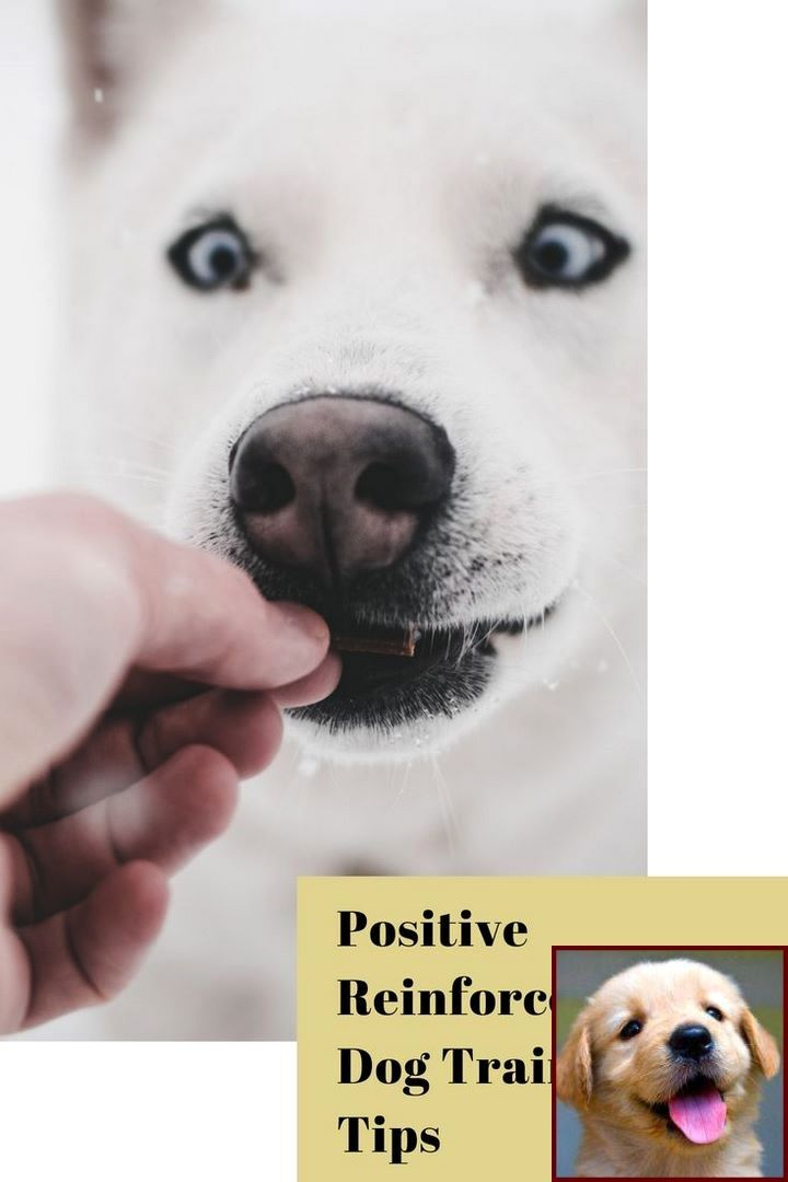 Pin By Kelly Delta Dog Training On Dog Behavior Dog Behavior