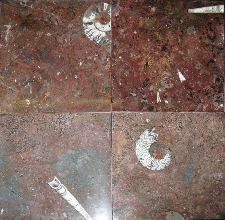 Red Ammonite And Orthoceras Fossil Marble Tiles 12 Game