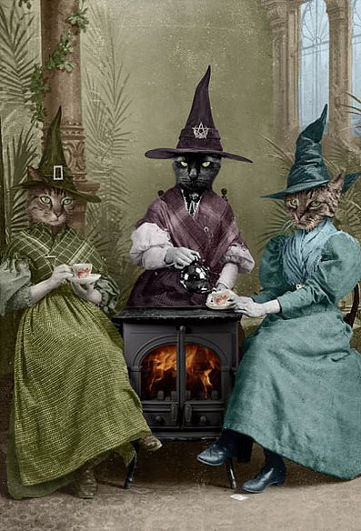 The Witches Brew. Adrian Higgins
