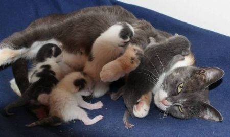 Say goodbye to productivity and hello to the Looney Tune foster kittens as they liven up your day with their kitten antics 24 hours a day. http://www.moderncat.com/blogs/taryn/2013/09/kitten-cam The Kitten Cam! | Modern Cat