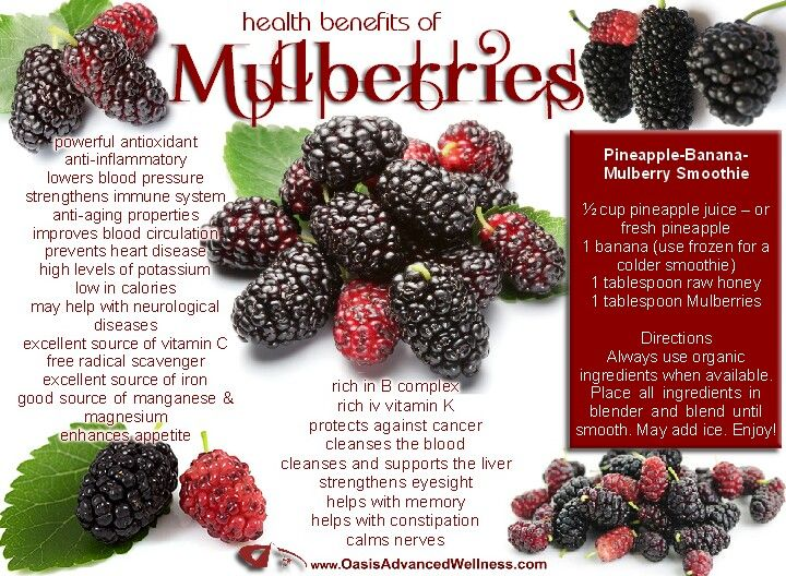 mulberry fruit is fruit leather healthy